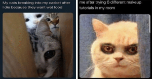 These past few weeks have been weird but luckily we can always rely on Caturday to deliver the smiles!#cats 3funnycats #catmemes #caturday #animalmemes #funnymemes: These past few weeks have been weird but luckily we can always rely on Caturday to deliver the smiles!#cats 3funnycats #catmemes #caturday #animalmemes #funnymemes