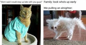 These past few weeks months have been weird but luckily we can always rely on Caturday to deliver the smiles!3cats #funnycats #catmemes #caturday #funnymemes: These past few weeks months have been weird but luckily we can always rely on Caturday to deliver the smiles!3cats #funnycats #catmemes #caturday #funnymemes