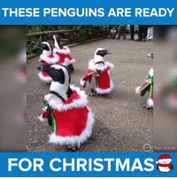 Dressed and ready for their holiday party! #onedip: THESE PENGUINS ARE READY  fo Kyle Goose  FOR CHRISTMAS Dressed and ready for their holiday party! #onedip