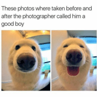 Memes, 🤖, and Weeds: These photos where taken before and  after the photographer called him a  good boy 😂😂 lol - -( - 420 memesdaily Relatable dank MarchMadness HoodJokes Hilarious Comedy HoodHumor ZeroChill Jokes Funny KanyeWest KimKardashian litasf KylieJenner JustinBieber Squad Crazy Omg Accurate Kardashians Epic bieber Weed TagSomeone hiphop trump rap drake