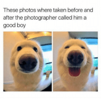 cutieeee . . . . . [ funny memes meme comedy comics cool textpost textposts l4l likeforlike laugh funnypictures pictures funnymemes humor post relateable lol lmao 😂 memez tumblr funnytumlr mood haha xd ]: These photos where taken before and  after the photographer called him a  good boy cutieeee . . . . . [ funny memes meme comedy comics cool textpost textposts l4l likeforlike laugh funnypictures pictures funnymemes humor post relateable lol lmao 😂 memez tumblr funnytumlr mood haha xd ]
