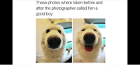 Taken, Good, and Boy: These photos where taken before and  after the photographer called him a  good boy <p>Stolen from cowbelly</p>