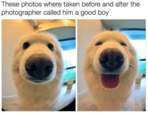That face of a beauty: These photos where taken before and after the  photographer called him a good boy That face of a beauty