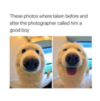 Taken, Girl Memes, and Good Boy: These photos where taken before and  after the photographer called him a  good boy IM DYING FROM CUTENESS 😍 TAG A FRIEND
