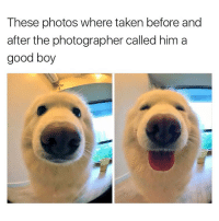 Memes, Taken, and 🤖: These photos where taken before and  after the photographer called him a  good boy Hi