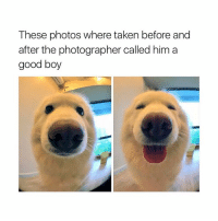 Taken, Girl Memes, and Sleepy: These photos where taken before and  after the photographer called him a  good boy I'm a bit sleepy