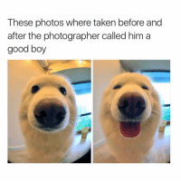 Taken, Girl, and Good Boy: These photos where taken before and  after the photographer called him a  good boy OMG AWWWW