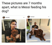 Memes, Messi, and Pictures: These pictures are 7 months  apart, what is Messi feeding his  dog?  leomessi  leomessi 👊⚽️🐕 Messi Pup