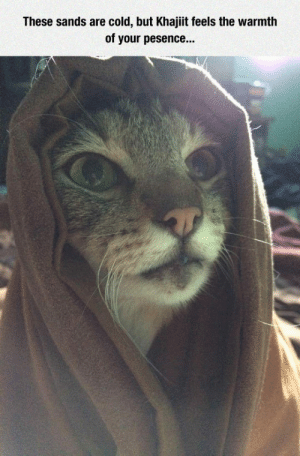 Tumblr, Blog, and Cold: These sands are cold, but Khajiit feels the warmth  of your pesence... epicjohndoe:  Khajiit Cat