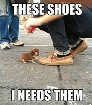 Best Friend, Cute, and Dogs: THESE SHOES  ONEEDS THEM National Dog Day is August 24, and there's no better way to celebrate man's best friend than with these cute, relatable and funny dog memes and silly quotes about dogs.  #relatable #dogs #memes #nationaldogday