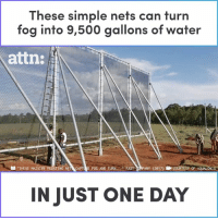 "Memes, Water, and 🤖: These simple nets can turn  fog into 9,500 gallons of water  attn:  ""THESE MASSI  TING NET CAPTURE FOG AND TURN FAST CRMPANY (2017) ECOURTESY OF AQUALONIS  IN JUST ONE DAY These simple nets can turn fog into 9,500 gallons of water in just one day."