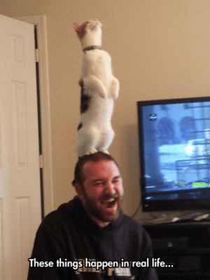 lolzandtrollz:Crazy Cat People: These things happen in real life... lolzandtrollz:Crazy Cat People