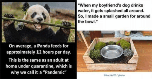 These tweets and images ought to get a few smiles out of you!#wholesome #wholesomememes #wholesomeanimals #animalmemes #: These tweets and images ought to get a few smiles out of you!#wholesome #wholesomememes #wholesomeanimals #animalmemes #