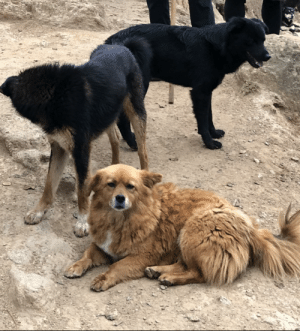 Dogs, Wild, and Hiking: These wild dogs we found hiking!