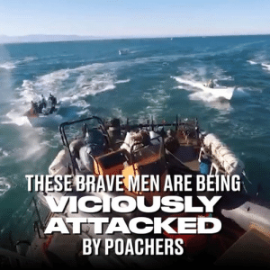 Dank, Fight, and Back: THESEBRAVEMEN ARE BEING  COUSLY  ATTACKED  BY POACHERS Their boat was swarmed by poachers and they had no choice but to fight back! 😱💪  Sea Shepherd Conservation Society