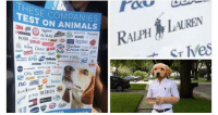 Animals, Avon, and Dove: THESEC  HESE COMPANIES  TEST ON ANIMALS  3M 409  ACUVUE Aveeno  AXE AVON  BOSS BANI  illimie ⑤  & oenone @  Dove prano Dc Crest DsEsA  AMS  GLAD  MAYBELLINE Old Sic  REVLON PANTENE  hes REDKEN We've gone too far