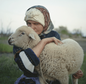 theseromaniansarecrazy: A Romanian woman, a Romanian lamb. Perfect rural photo. : theseromaniansarecrazy: A Romanian woman, a Romanian lamb. Perfect rural photo.
