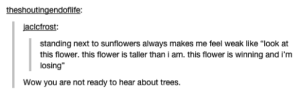 """Sunflowers: theshoutingendoflife  jaclcfrost  standing next to sunflowers always makes me feel weak like """"look at  this flower. this flower is taller thani am. this flower is winning and i'm  losing""""  Wow you are not ready to hear about trees. Sunflowers"""