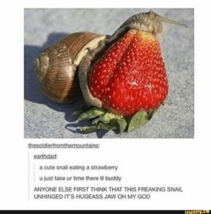 Cute, God, and Oh My God: thesoldierfromthemountains:  earthdad:  a cute snail eating a strawberry  u just take ur time there lil buddy  ANYONE ELSE FIRST THINK THAT THIS FREAKING SNAIL  UNHINGED IT'S HUGEASS JAW OH MY GOD  ifunny.co