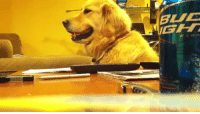 theteastainedpages: averyangryfeminist:  pahnem:  vua2:  oh my god  everyone needs to see this video at least once in their life  I think my favorite thing about dogs is that they can, in fact, perceive the tone/mood of music, just as they can with human voices.  I think the best part about this is that there was an actual academic study done to find out what music dogs preferred, they set it up by kenneling dogs and figuring out which kind of music caused them to be more relaxed in the situation, and they found out that most dogs prefer soft rock and reggae. He probably really digs it.   He like to jam: theteastainedpages: averyangryfeminist:  pahnem:  vua2:  oh my god  everyone needs to see this video at least once in their life  I think my favorite thing about dogs is that they can, in fact, perceive the tone/mood of music, just as they can with human voices.  I think the best part about this is that there was an actual academic study done to find out what music dogs preferred, they set it up by kenneling dogs and figuring out which kind of music caused them to be more relaxed in the situation, and they found out that most dogs prefer soft rock and reggae. He probably really digs it.   He like to jam