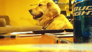 Dogs, God, and Life: theteastainedpages: averyangryfeminist:  pahnem:  vua2:  oh my god  everyone needs to see this video at least once in their life  I think my favorite thing about dogs is that they can, in fact, perceive the tone/mood of music, just as they can with human voices.  I think the best part about this is that there was an actual academic study done to find out what music dogs preferred, they set it up by kenneling dogs and figuring out which kind of music caused them to be more relaxed in the situation, and they found out that most dogs prefer soft rock and reggae.  He probably really digs it.