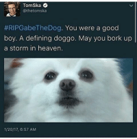 RIP: @thetomska  #RIP Gabe The Dog  You were a good  boy. A defining doggo. May you bork up  a storm in heaven.  1/20/17, 6:57 AM RIP