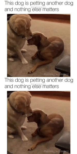 They're both such good dogs I don't even know where to start.via: dogsbeingbasic (alisons__wonderland): They're both such good dogs I don't even know where to start.via: dogsbeingbasic (alisons__wonderland)