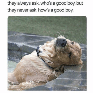 Good, Never, and Boy: they always ask. who's a  they never ask. how's a good boy.  good boy. but How's a doggo
