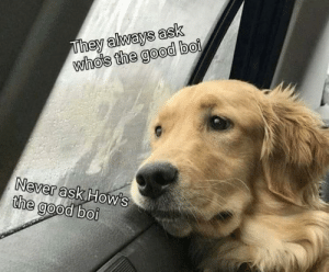 Rainy days and good bois always get me down. by neurotocsin FOLLOW 4 MORE MEMES.: They always ask  who's the good boi  Never ask How's  the good boi Rainy days and good bois always get me down. by neurotocsin FOLLOW 4 MORE MEMES.