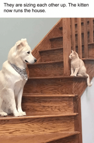 24 Funny Animal Pictures You Really Just Need To See For Yourself - JustViral.Net: They are sizing each other up. The kitten  now runs the house 24 Funny Animal Pictures You Really Just Need To See For Yourself - JustViral.Net
