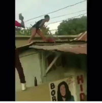 they be havin wrestlin matches in jamaica: they be havin wrestlin matches in jamaica