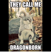 Skyrim, Tes, and Elderscrolls: THEY CALL ME  DRAGON BORN  quickmeme.com Look at this Dragonborn Khajiit ~ Accounts: - Other TES IG: @tundraofskyrim - Twitter: skyrim_dragon_ - Snapchat: cocoachicken - YouTube: Link in bio. - Personal: @holly_rowlands_ • tes elderscrolls theelderscrolls elderscrollsv theelderscrollsv elderscrollsonline eso skyrim skyrimmeme skyrimmemes gaming game games rpg dovahkiin Dragonborn Bethesda dragon dragons khajiit cat cats kitten kittens tinysmile