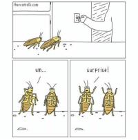 Memes, 🤖, and Cockroach: they cantalk.com  um  As  surprise!  AADLU Yep, cockroaches are just trying to throw you a surprise party... (Via letthemtalk.com)