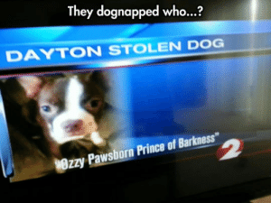 "srsfunny:That Dog Name Is Marvelous: They dognapped who...?  DAYTON STOLEN DOG  Wrzy Pawsborn Prince of Barkness"" srsfunny:That Dog Name Is Marvelous"