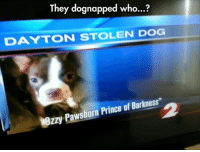 """Prince, Dog, and Who: They dognapped who...?  DAYTON STOLEN DOG  zzy Pawsborn Prince of Barkness"""""""