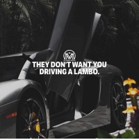 Driving, Fail, and Fall: THEY DON'T WANT You  DRIVING A LAMBO. They just want you to f*ck up! The fact is, most people are going to want you to fail. It may not be clear to them, or it may not be clear to you, but their basic instinct is to want your work to fall apart and have it all go wrong. It's a very rare thing to find someone who genuinely wants you to succeed if they aren't invested in that success. But why? Well, it takes the pressure off them and redeems their shitty life choices. Most people won't take risks or strike out on their own. Not everyone has to, not everyone should. But instead of being honest about the fact that they just don't want to do it or they aren't suited to that kind of work, a lot of people try to hide behind this idea that they're making the right decision based on good, solid evidence. The flip side of that is when you're successful, after taking a risk and doing something that you believe in, it throws a sharp light on the people who never make the choice to do that. Did it make sense? Cool, just remember to just do YOU and F***ck other people's opinions!🔥 - fuckup success millionairementor
