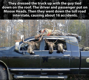 srsfunny:When Grown Men Get Bored: They dressed the truck up with the guy tied  down on the roof. The driver and passenger put on  Moose Heads. Then they went down the toll road  interstate, causing about 16 accidents. srsfunny:When Grown Men Get Bored