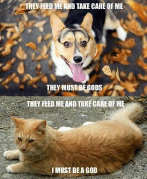 Cats and dogs: THEY FEED ME AND TAKE CARE OF ME  THEY MUSTBEGODS  THEY FEED ME AND TAKE CARE OF ME  IMUST BEA GOD Cats and dogs