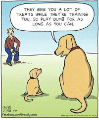 Dumb, Facebook, and facebook.com: THEY GIVE YOU A LOT OF  TREATS WHILE THEY RE TRAINING  YOU, SO PLAY DUMB FOR AS  LONG AS YOU CAN.  11-29  facebook.com/brevitycomic Sneaky boi
