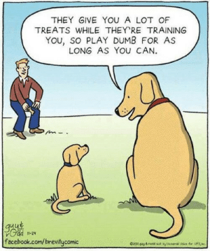 Play Dumb: THEY GIVE YOU A LOT OF  TREATS WHILE THEY RE TRAINING  YOu, so PLAY DUMB FOR AS  LONG AS YOU CAN  11-24  facebook.com/brevitycomic  for S  Oal gy&red sst tans