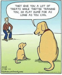 Play Dumb: THEY GIVE YOU A LOT OF  TREATS WHILE THEY RE TRAINING  YOU, SO PLAY DUMB FOR AS  LONG AS YOU CAN.  facebook.com/brevityconic