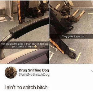 Bitch, Dank, and Fire: They gotta fire you bro  This drug sniffing dog is trash cause I deadass  got a ounce on me rn  Drug Sniffing Dog  @aintNoSnitchDog  ain't no snitch bitch Goodboi by FitFire MORE MEMES