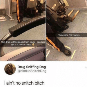Bitch, Dank, and Fire: They gotta fire you bro  This drug sniffing dog is trash cause I deadass  got a ounce on me rn  Drug Sniffing Dog  @aintNoSnitchDog  ain't no snitch bitch Good boi by cvzmir MORE MEMES