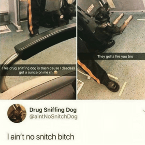 Bitch, Dank, and Fire: They gotta fire you bro  This drug sniffing dog is trash cause I deadass  got a ounce on me rn  Drug Sniffing Dog  @aintNoSnitchDog  l ain't no snitch bitch Thats my dawg by royrogersmcfreely12 MORE MEMES