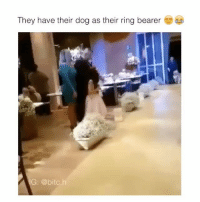 Funny, Bearer, and  Ring Bearer: They have their dog as their ring bearer  IG @bitc.h
