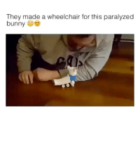 Bunnies, Memes, and 🤖: They made a wheelchair for this paralyzed  bunny