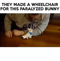 Bunnies, Memes, and 🤖: THEY MADE A WHEELCHAIR  FOR THIS PARALYZED BUNNY Follow me (@hangars) for more! 💕 - - @hangars @hangars @hangars @hangars @hangars @hangars @hangars @hangars @hangars