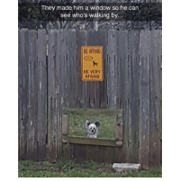 Memes, Pugs, and 🤖: They made him a window so he can  see who's walking by.  BE AFRAID  BE VERY  AFRAID Follow my other accounts @x__social_butterfly__x @x_antisocial_pug_life_x