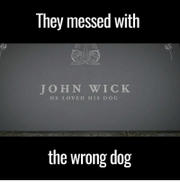 """You killed John Wick's dog's human!"" This is brilliant 😂😂: They messed With  JOHN WICK  HE LOVED HIS D O G  the wrong dog ""You killed John Wick's dog's human!"" This is brilliant 😂😂"