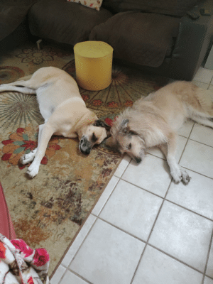 They never get along like this. They don't hate each other but the fuzzy one is scared of everything.: They never get along like this. They don't hate each other but the fuzzy one is scared of everything.